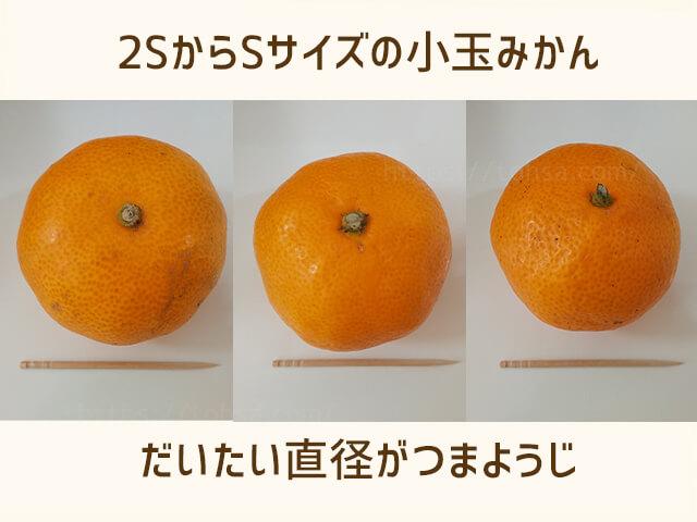 みかん 小玉 甘い 箱 愛媛 箱買い 人気 3kg